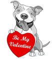 Valentine Pit Bull with Heart vector image