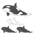 set of black and white killer whale images vector image