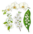 white flowers - lily of the valley orchid apple vector image