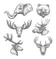 animal sketch set of african and forest mammal vector image