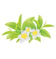 Green tea2 vector image