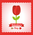 valentines day tulip flower decoration card vector image