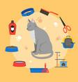 Cartoon cat care concept vector image