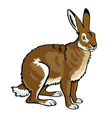 sitting hare vector image