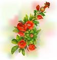 Pomegranate blossoms vector image