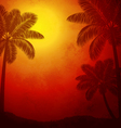 Palm trees at sunset vector image