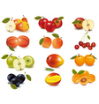 big group of apples  vector image