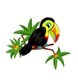 Toucan on branch vector image