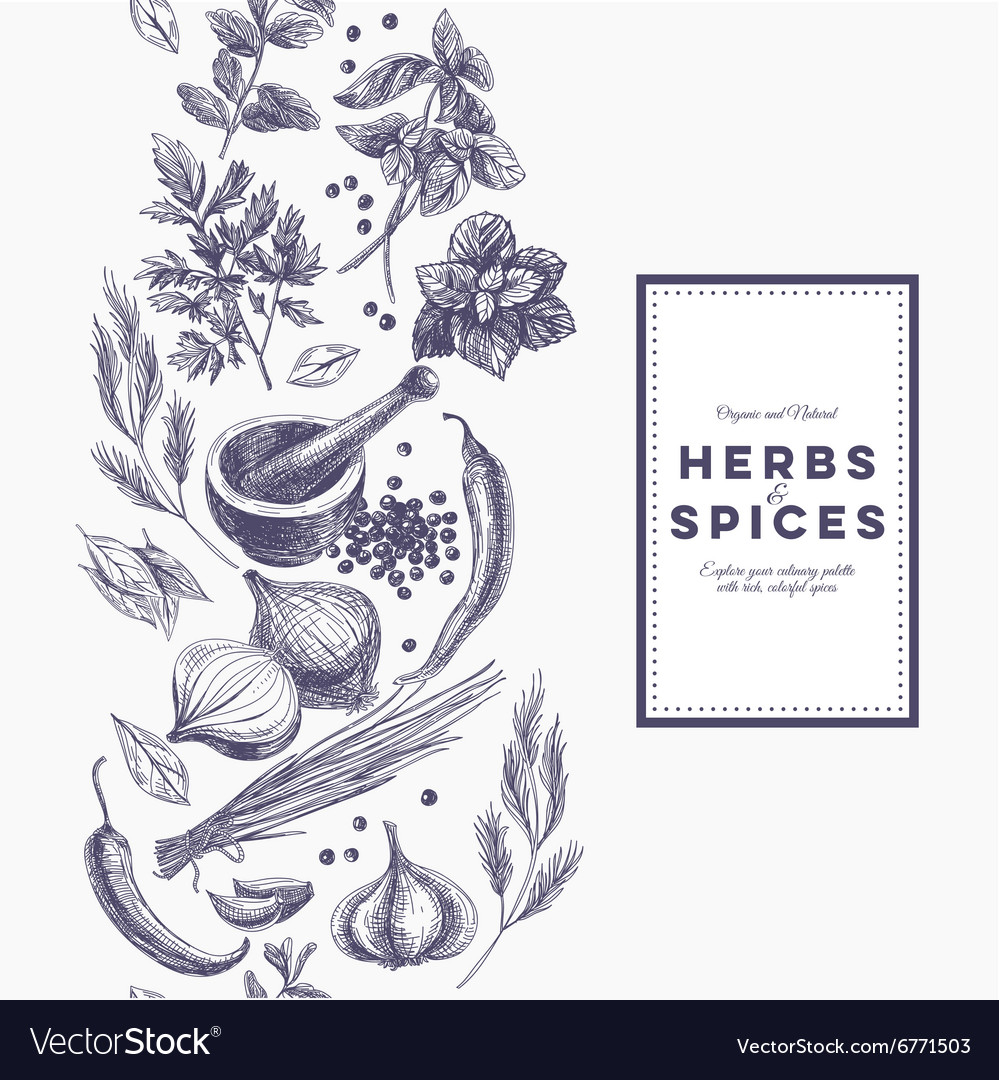 Background with hand drawn herbs and spices vector