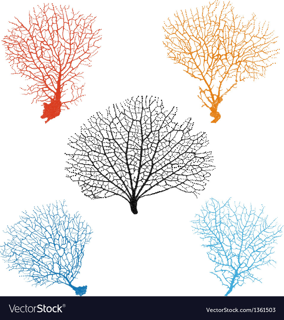 Sea fan corals set vector