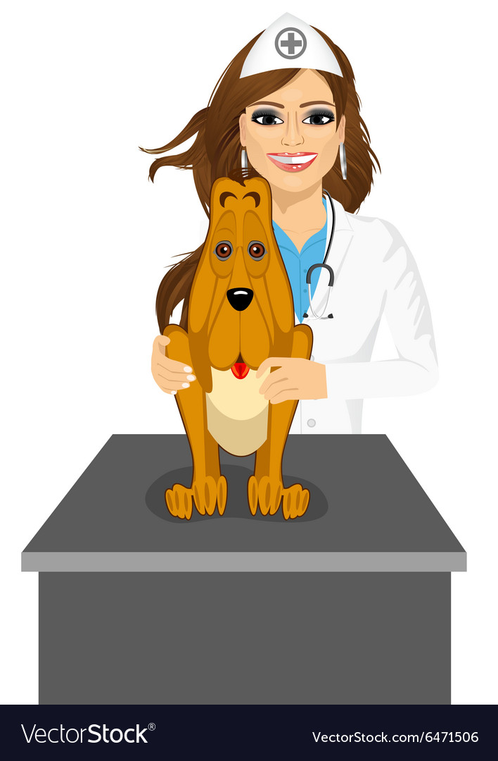 Bloodhound sitting on table visiting veterinarian vector