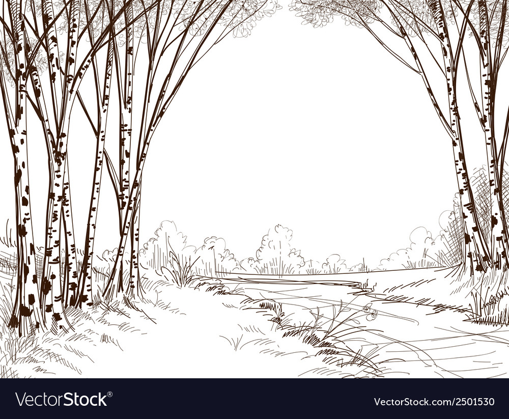 Birch tree forest graphic background vector