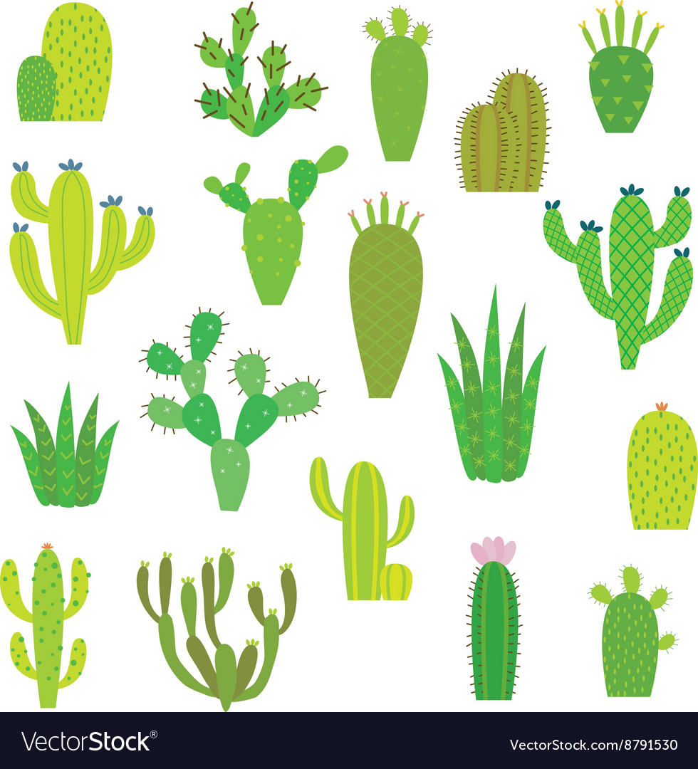 Cactus collection in vector