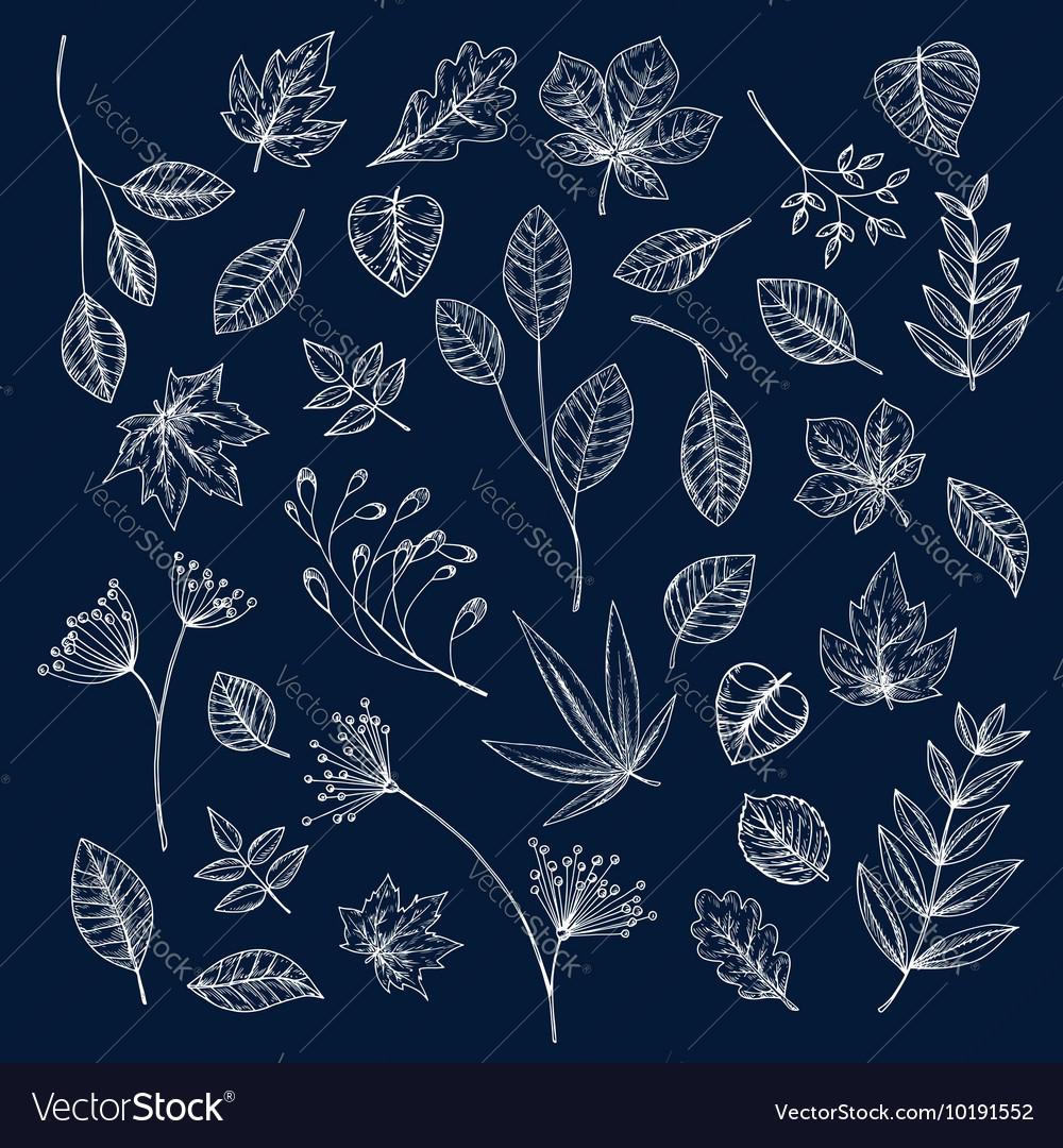 Branches of trees and herbs with leaves vector