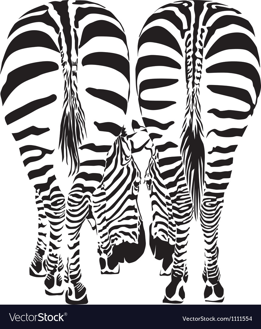Two zebras eating  image vector