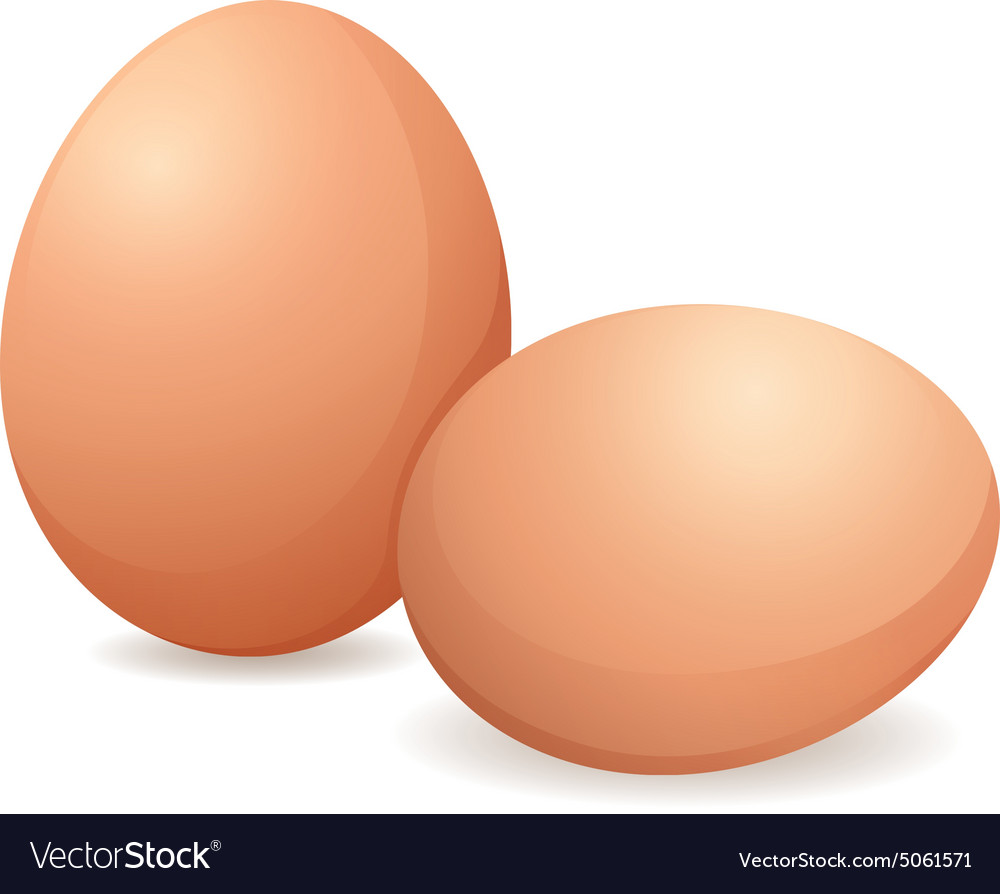 Raw eggs vector