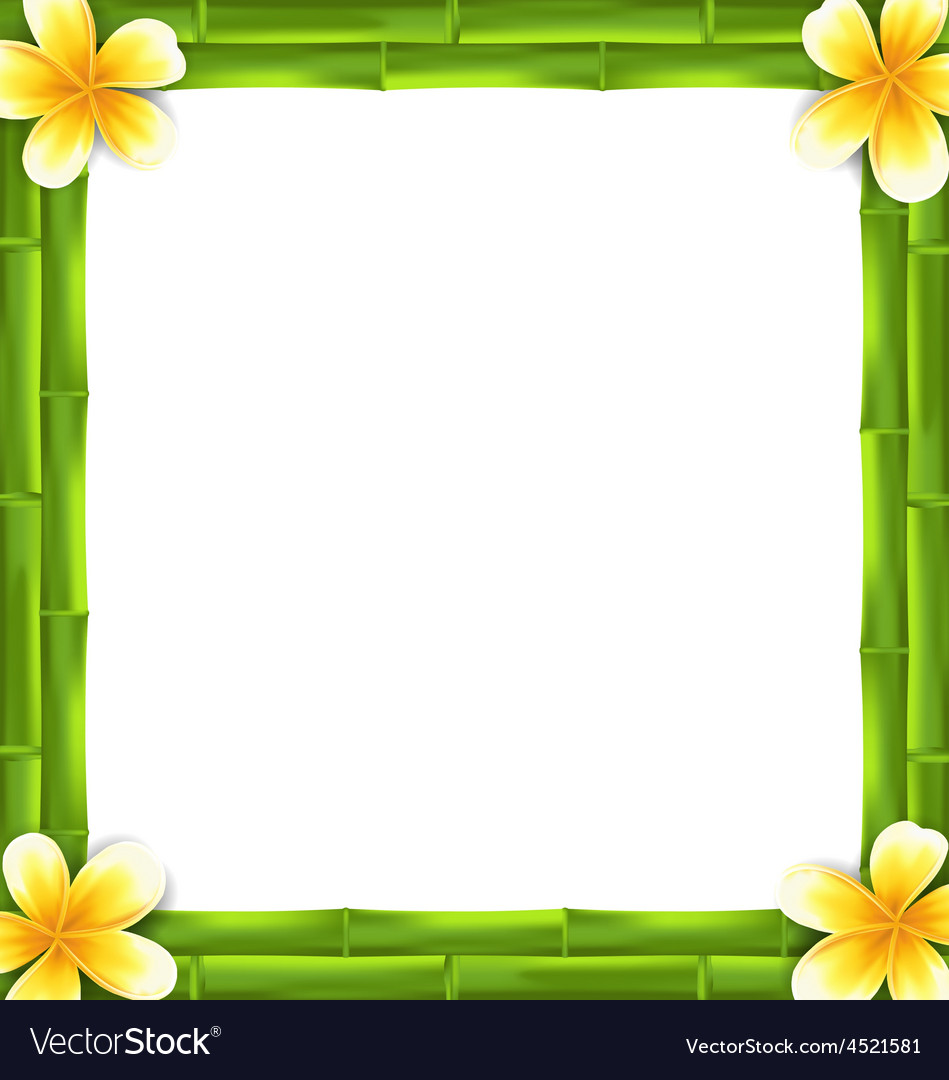 Natural frame made bamboo and frangipani flowers vector