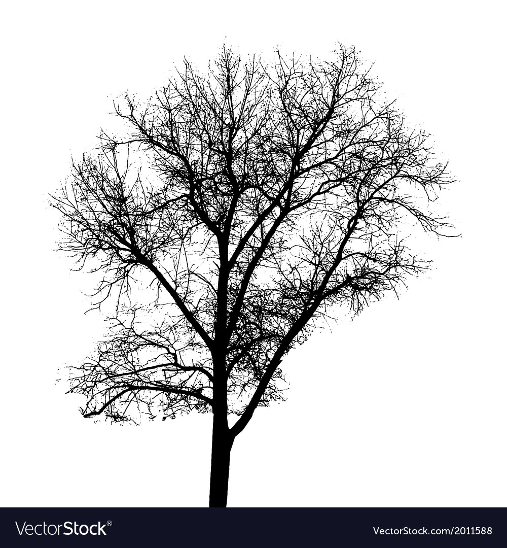 Tree silhouette isolated on white backgorund vector
