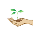 green plant growing in hand vector image
