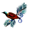 wilson s bird-of-paradise in brown color isolated vector image