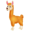 Llama cartoon vector image