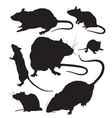 rat silhouette vector image