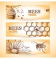 Bee banner sketch vector image