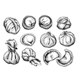 set of dumplings Vintage sketch vector image