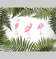 frame from palm leaf with white background vector image