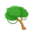 Green Tree With Liana In Tropical Jungle Natural vector image