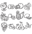 Stylized fruit set on a white background vector image vector image