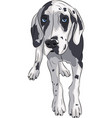 Puppy of the great dane vector image