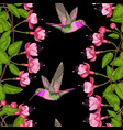 fuchsia and hummingbird seamless pattern vector image