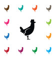 isolated hen icon cockerel element can be vector image