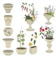 Flower pots with vegetables - herbspepper vector image