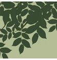 Walnut Tree leaves vector image