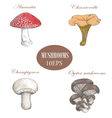 Set mushrooms colored  Mushrooms collection vector image