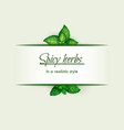 spicy herbs in a realistic style frame vector image