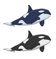 color image of a killer whale vector image vector image