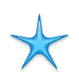 Blue starfish isolated on white background vector image