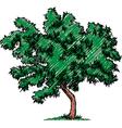 Sketch of a tree vector image vector image
