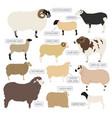 sheep breed icon set farm animal flat design vector image