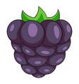 black berry icon cartoon style vector image