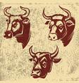 bull heads emblems on grunge background design vector image vector image