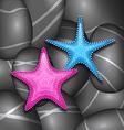 Starfishes among sea pebble stones vector image