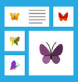 flat monarch set of violet wing beauty fly vector image
