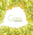 fresh grapes vector image vector image