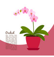 orchid indoor plant in pot banner vector image
