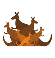 kangaroo family kind of australian wallaby herd vector image
