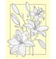 Lily flowers hand drawn vector image